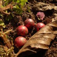 Earthworm Beads