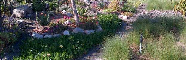 Aloes and hose