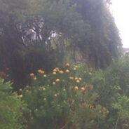 Fynbos in the rain